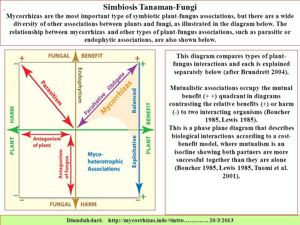 Simbiosis Tanaman-Fungi