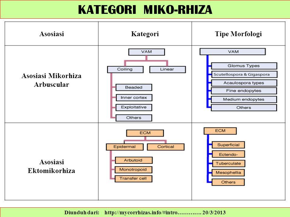 KATEGORI MIKO-RHIZA Asosiasi Kategori Tipe Morfologi