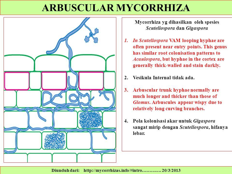 ARBUSCULAR MYCORRHIZA