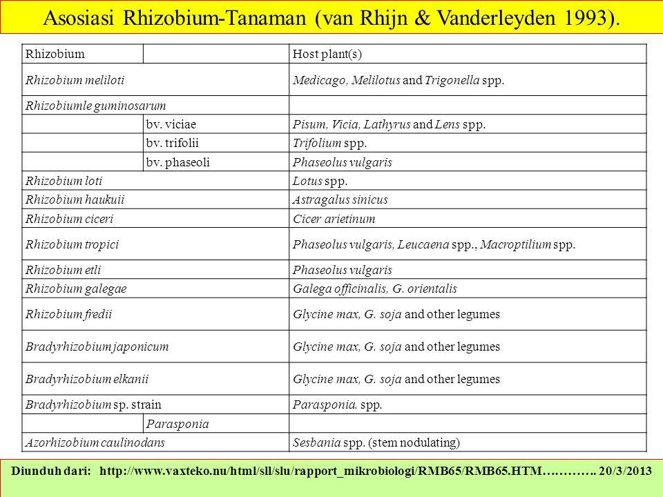 Asosiasi Rhizobium-Tanaman (van Rhijn & Vanderleyden 1993).