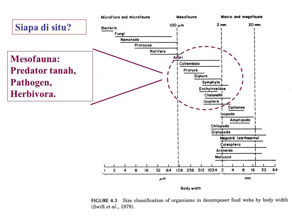 Siapa di situ Mesofauna: Predator tanah, Pathogen, Herbivora.