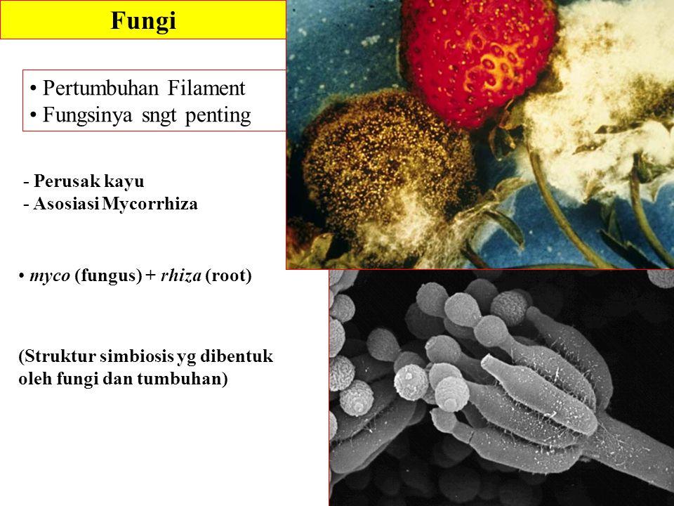 Fungi Pertumbuhan Filament Fungsinya sngt penting - Perusak kayu