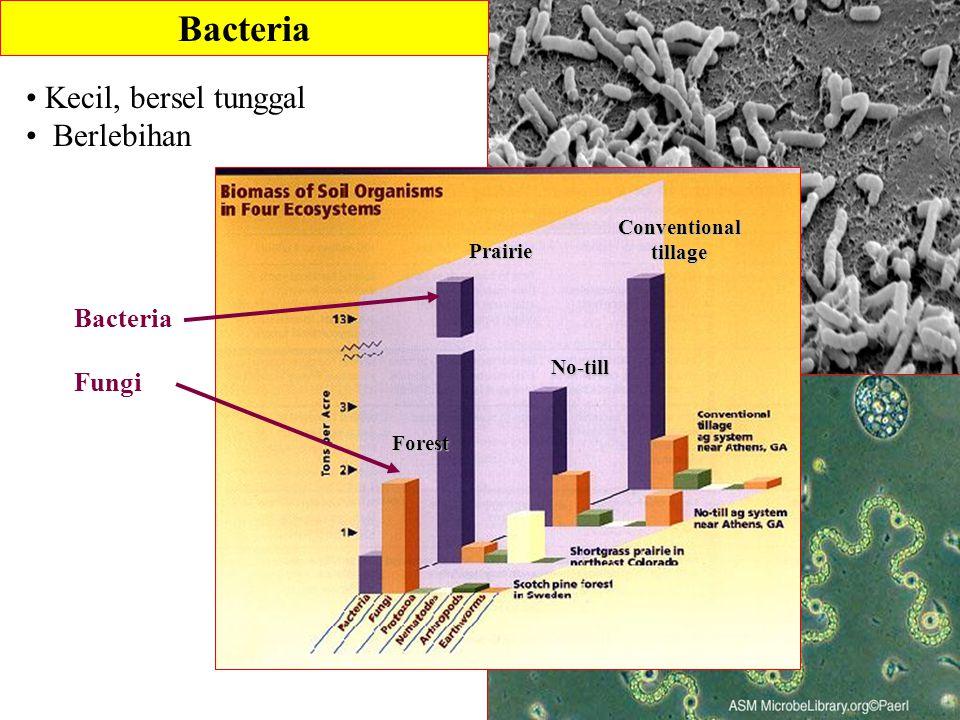 Bacteria Kecil, bersel tunggal Berlebihan Bacteria Fungi Conventional