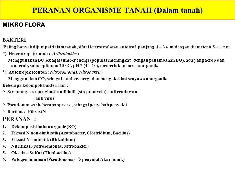 PERANAN ORGANISME TANAH (Dalam tanah)