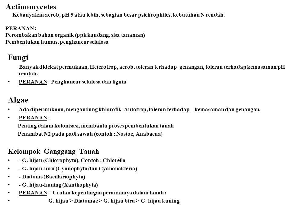 Actinomycetes Kebanyakan aerob, pH 5 atau lebih, sebagian besar psichrophiles, kebutuhan N rendah. PERANAN : Perombakan bahan organik (ppk kandang, sisa tanaman) Pembentukan humus, penghancur selulosa