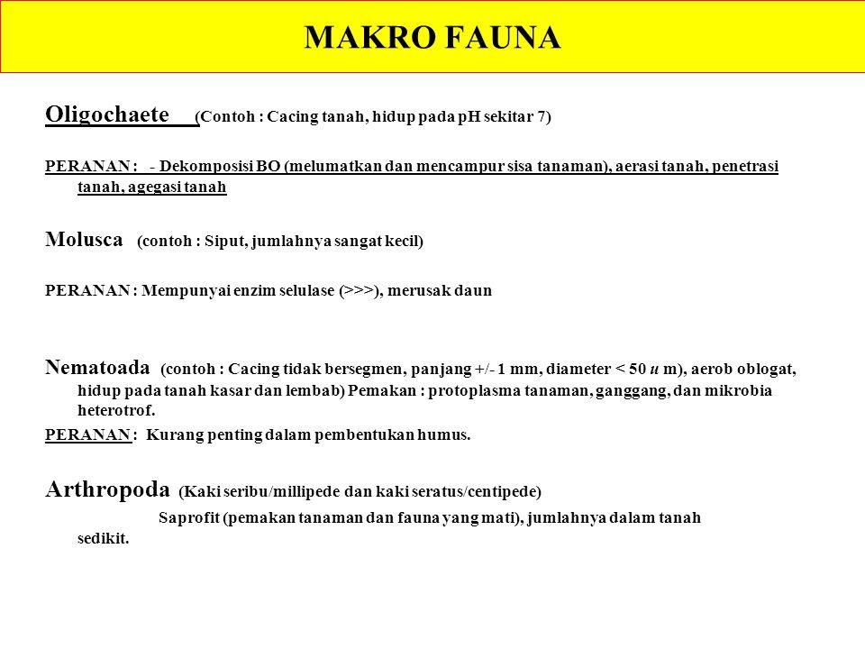 MAKRO FAUNA Oligochaete (Contoh : Cacing tanah, hidup pada pH sekitar 7)