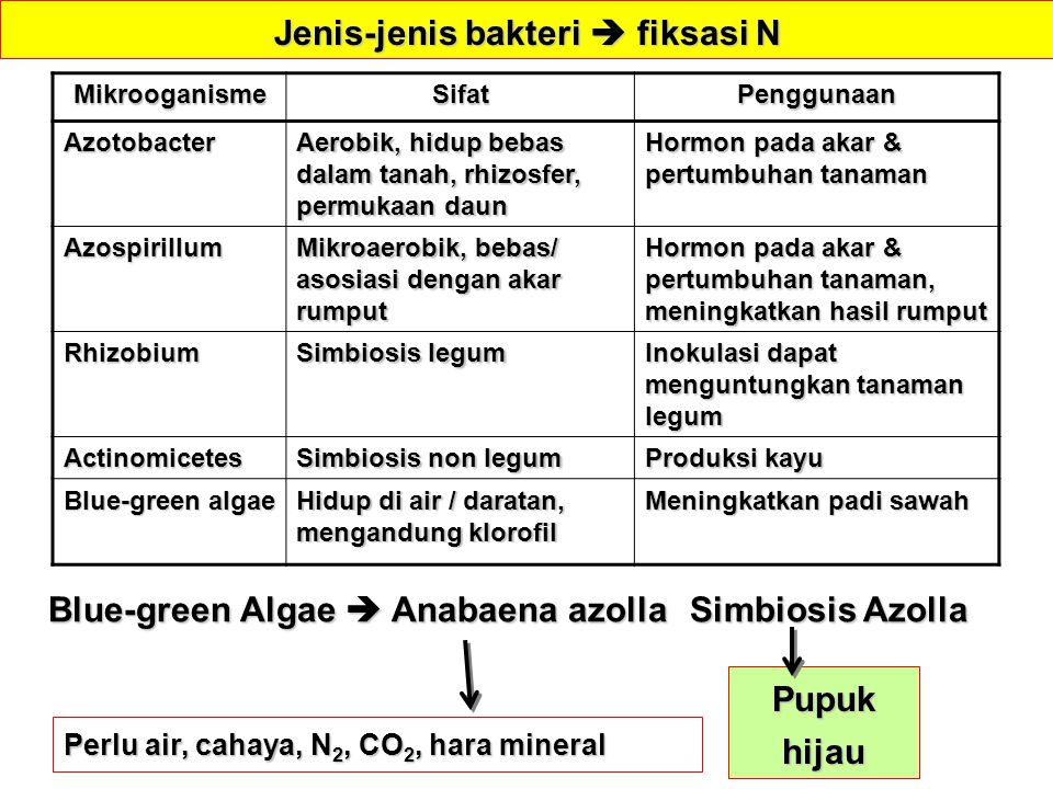 Jenis-jenis bakteri  fiksasi N