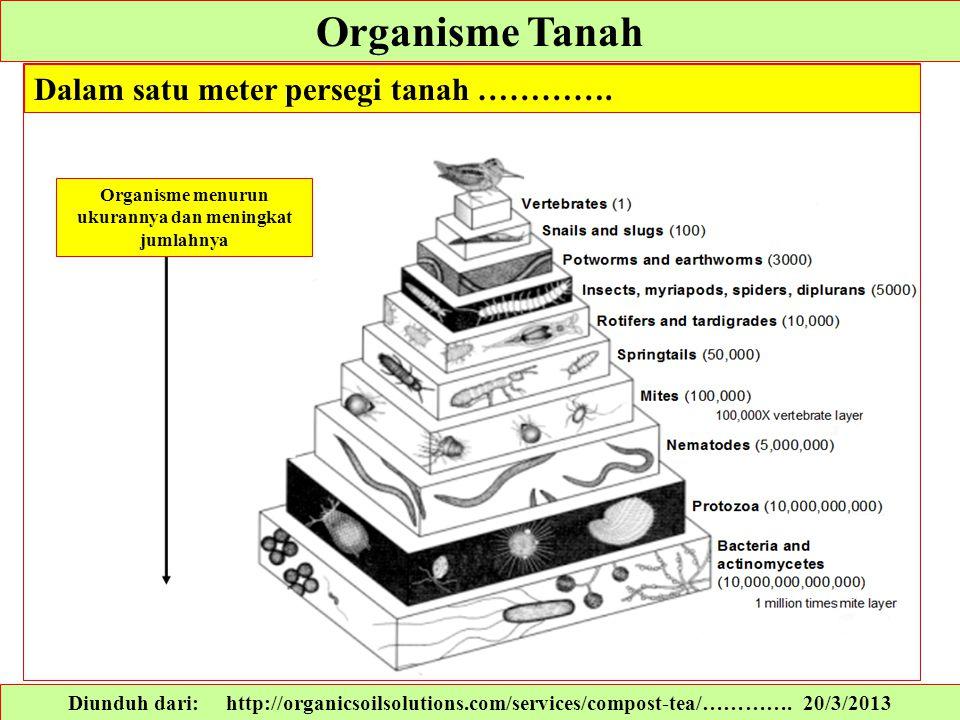 Organisme menurun ukurannya dan meningkat jumlahnya