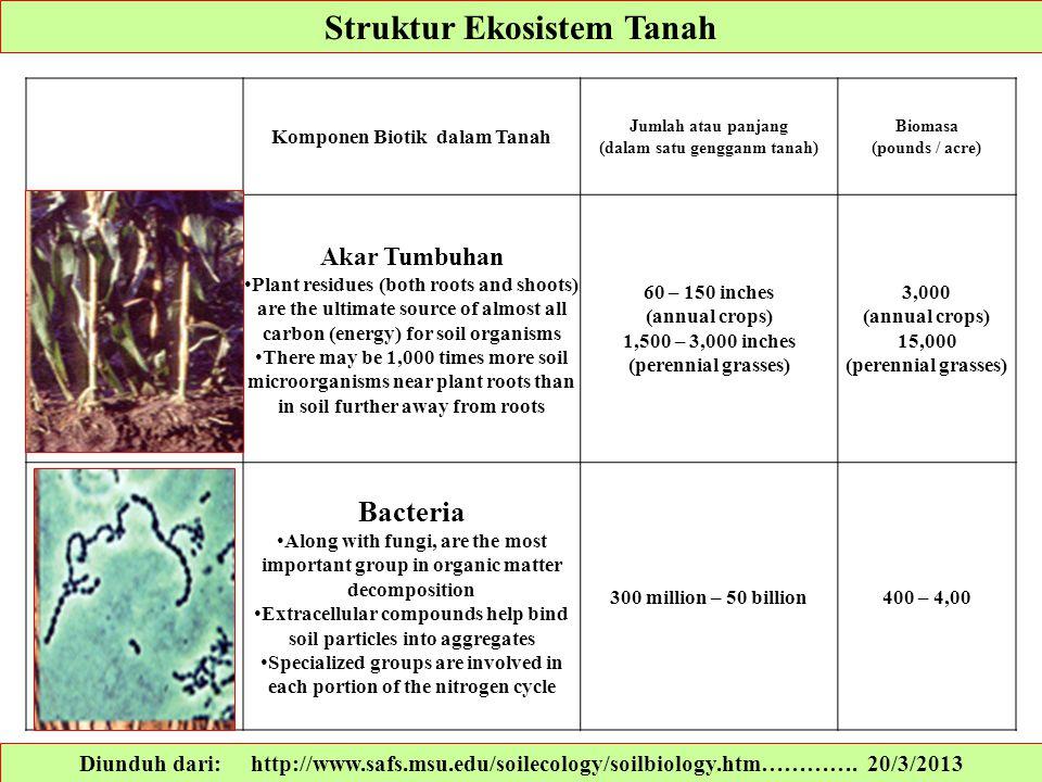 Struktur Ekosistem Tanah