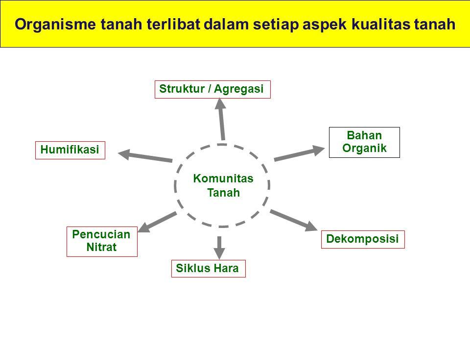 Organisme tanah terlibat dalam setiap aspek kualitas tanah