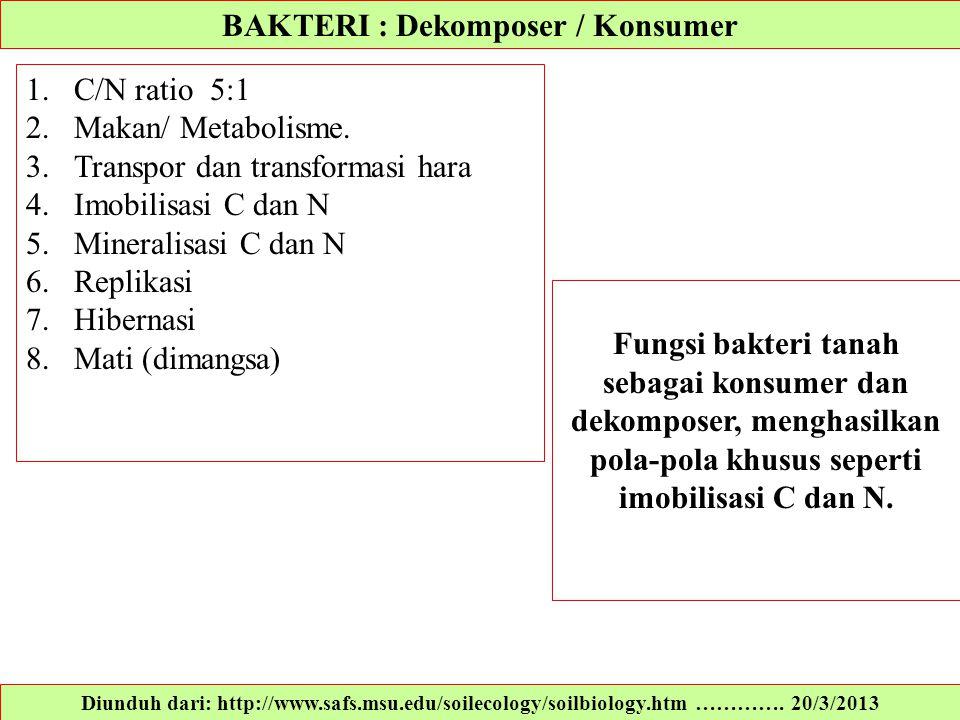 BAKTERI : Dekomposer / Konsumer