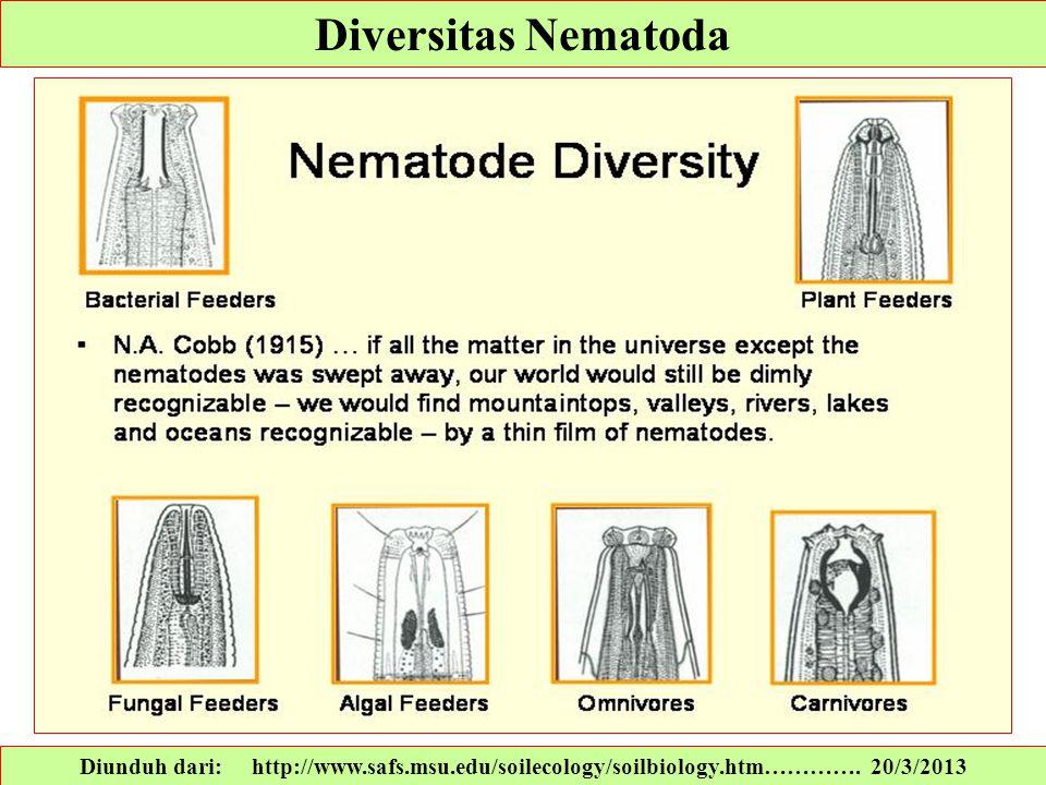 Diversitas Nematoda Diunduh dari: http://www.safs.msu.edu/soilecology/soilbiology.htm………….