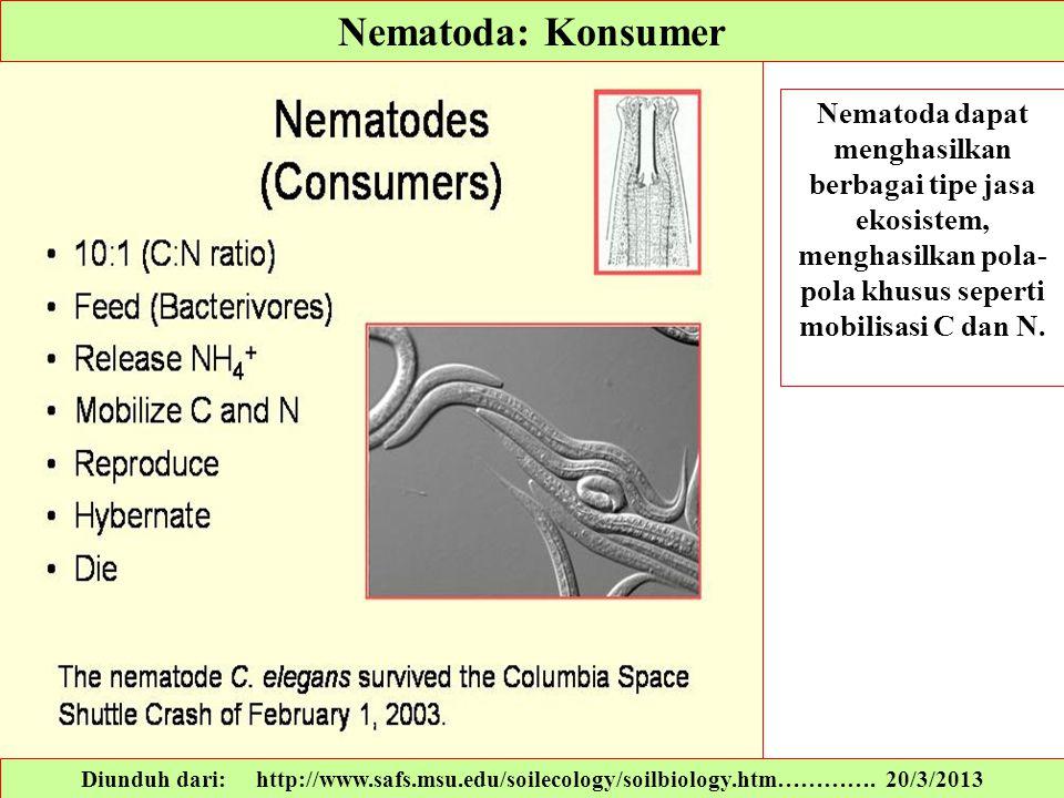 Nematoda: Konsumer Nematoda dapat menghasilkan berbagai tipe jasa ekosistem, menghasilkan pola-pola khusus seperti mobilisasi C dan N.