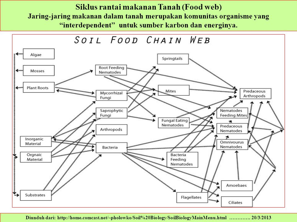 Siklus rantai makanan Tanah (Food web)