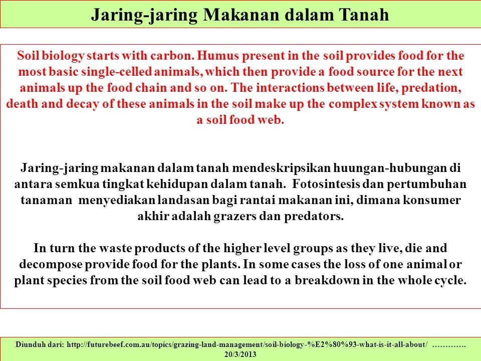 Jaring-jaring Makanan dalam Tanah