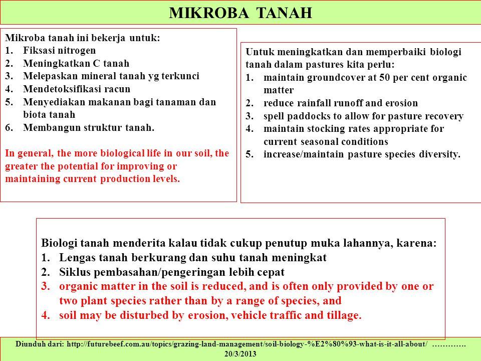 MIKROBA TANAH Mikroba tanah ini bekerja untuk: Fiksasi nitrogen. Meningkatkan C tanah. Melepaskan mineral tanah yg terkunci.