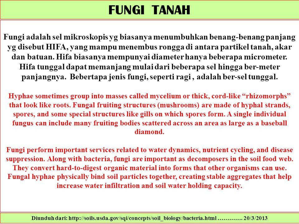 FUNGI TANAH