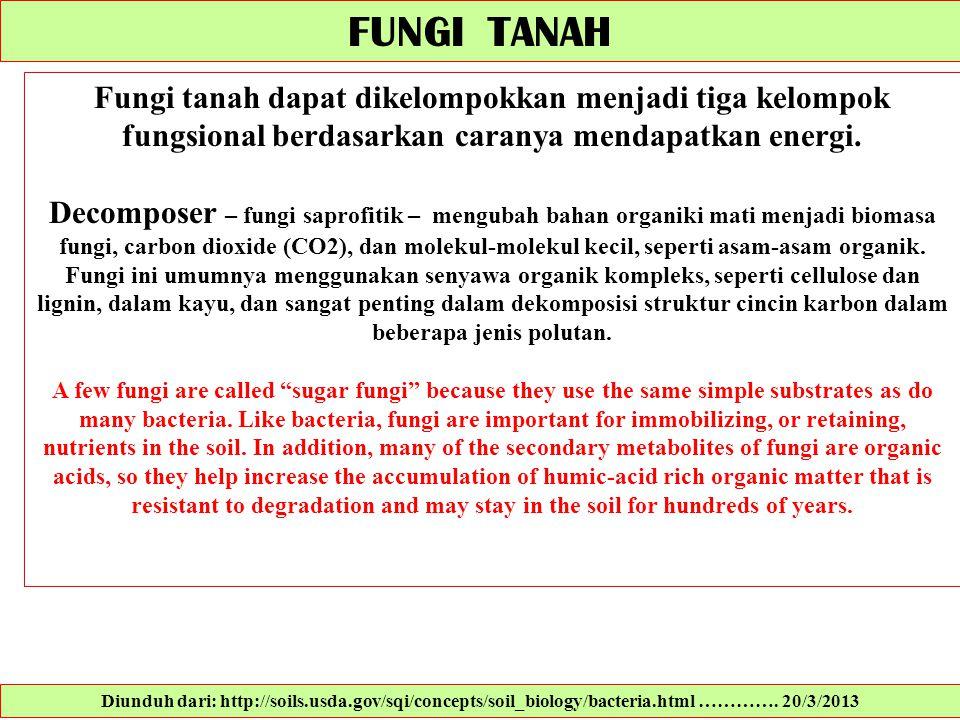 FUNGI TANAH Fungi tanah dapat dikelompokkan menjadi tiga kelompok fungsional berdasarkan caranya mendapatkan energi.