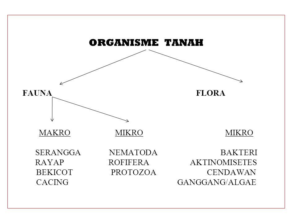 ORGANISME TANAH FAUNA FLORA
