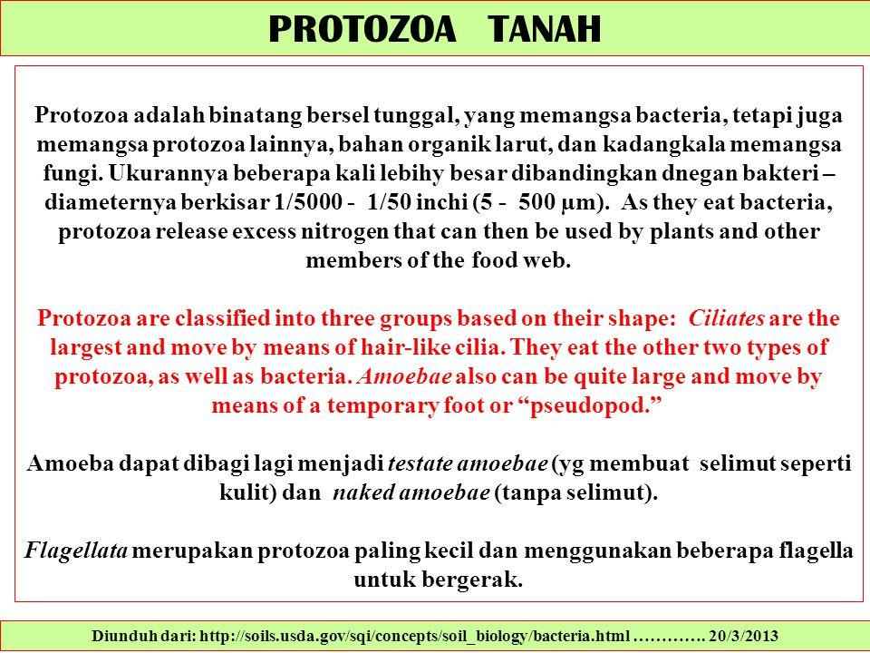 PROTOZOA TANAH