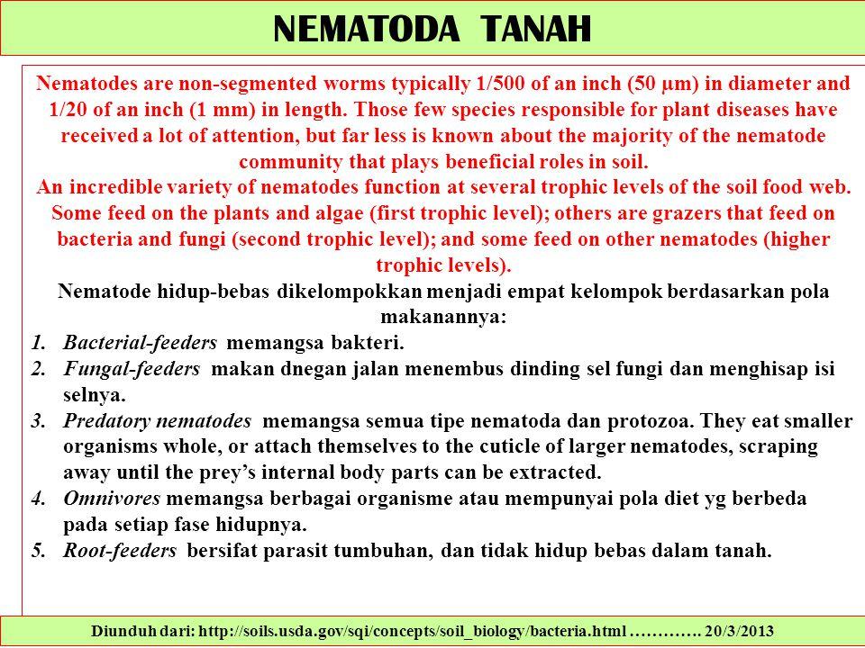 NEMATODA TANAH