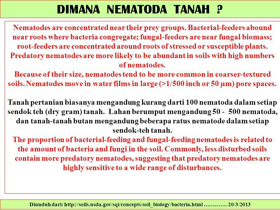 DIMANA NEMATODA TANAH