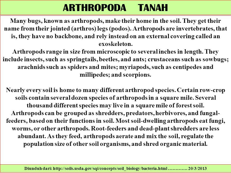 ARTHROPODA TANAH