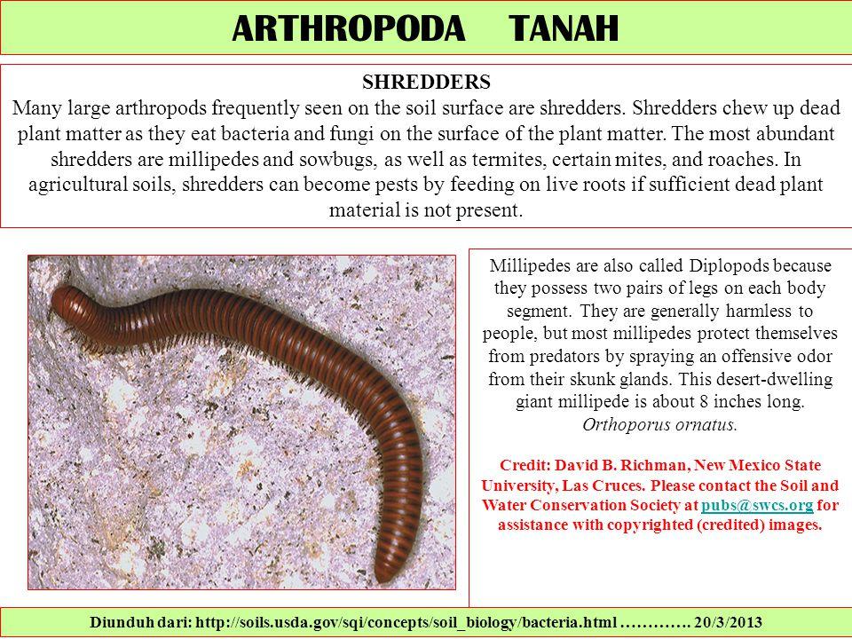 ARTHROPODA TANAH SHREDDERS