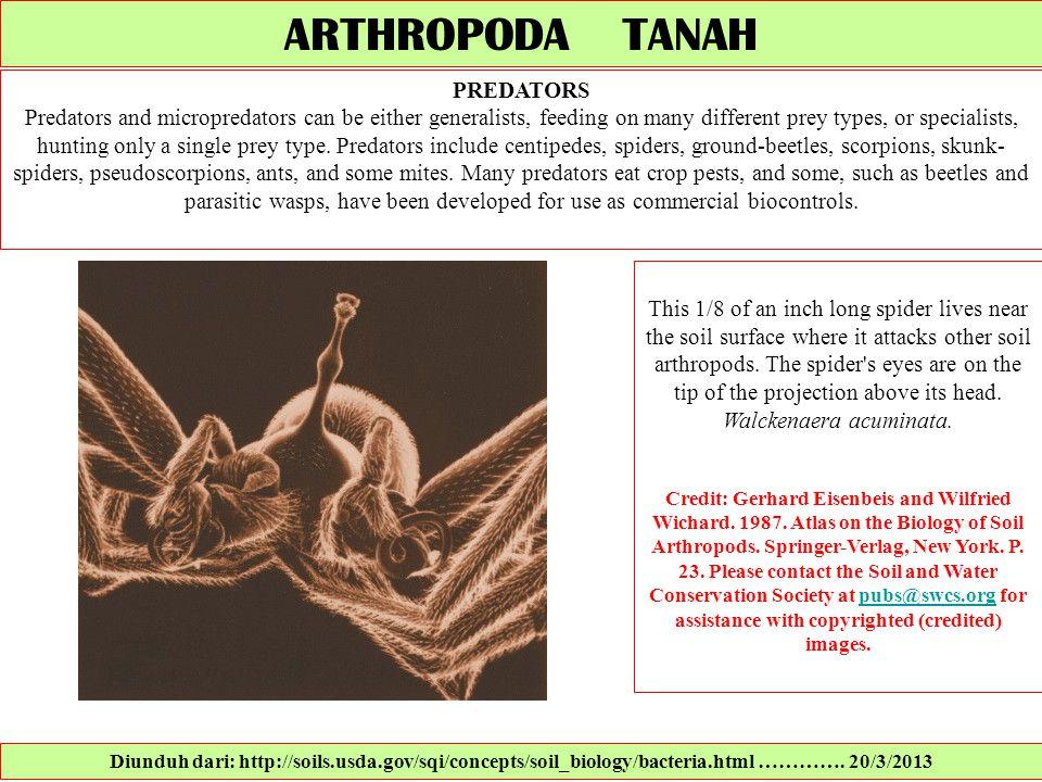 ARTHROPODA TANAH PREDATORS