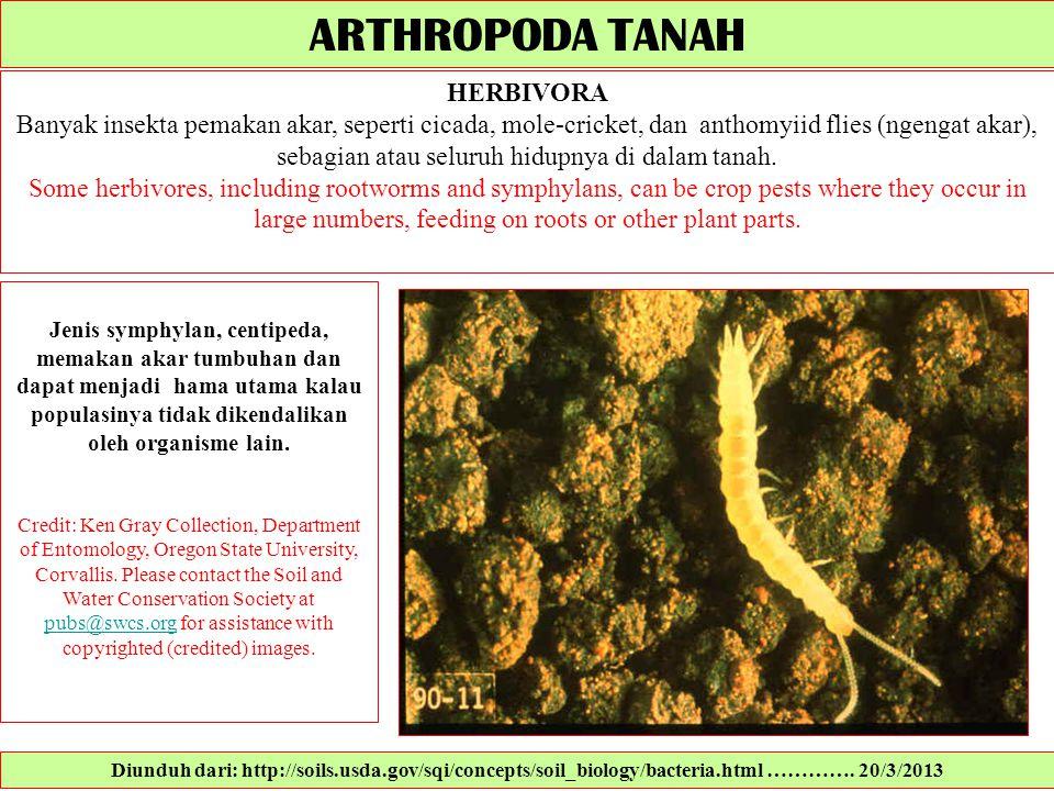 ARTHROPODA TANAH HERBIVORA