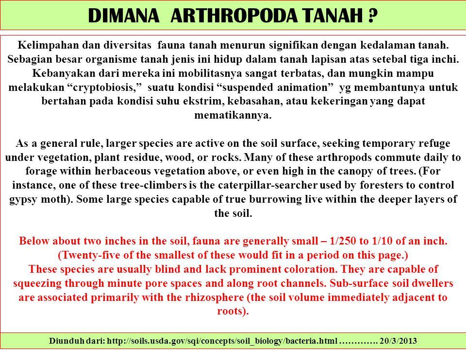 DIMANA ARTHROPODA TANAH
