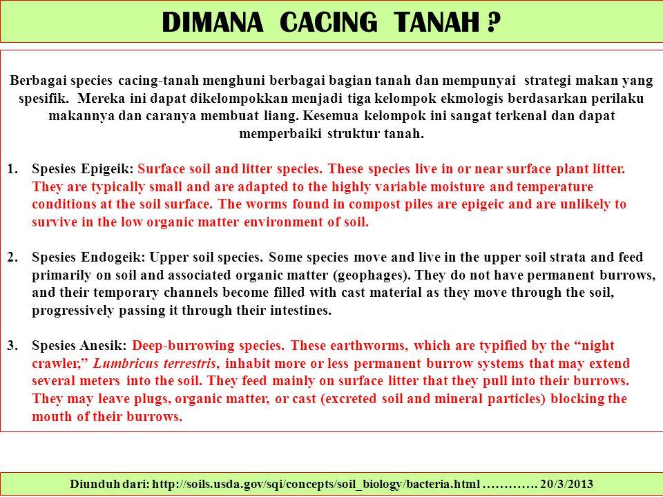 DIMANA CACING TANAH