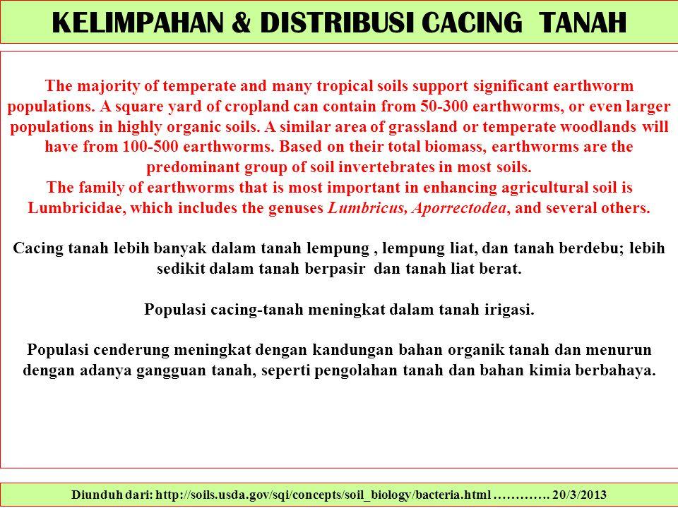 KELIMPAHAN & DISTRIBUSI CACING TANAH