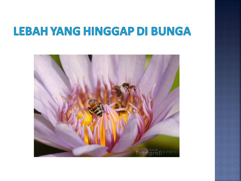 Lebah yang hinggap di bunga
