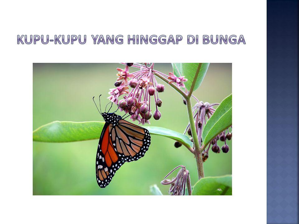 Kupu-kupu yang hinggap di bunga