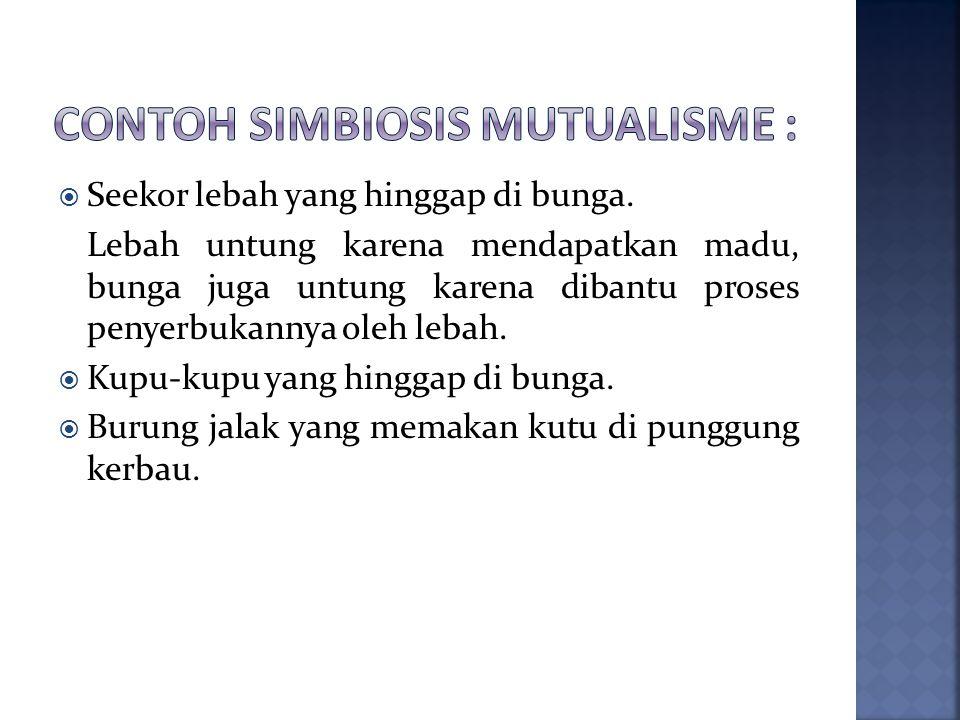 Contoh simbiosis mutualisme :
