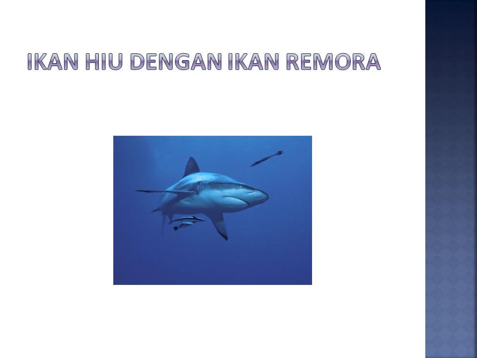 Ikan hiu dengan ikan remora