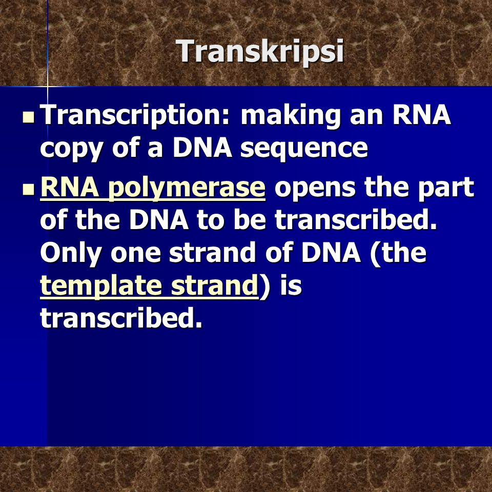 Transkripsi Transcription: making an RNA copy of a DNA sequence