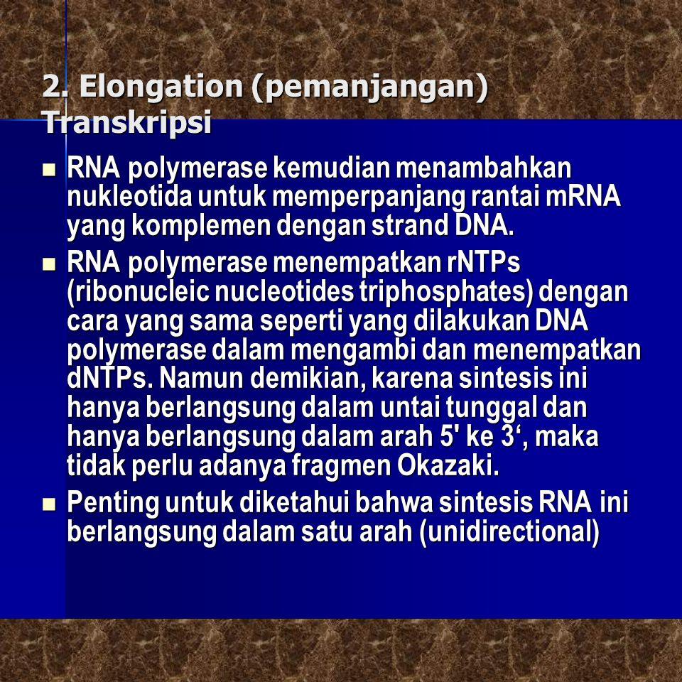 2. Elongation (pemanjangan) Transkripsi
