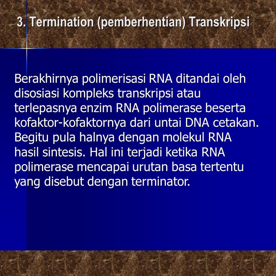 3. Termination (pemberhentian) Transkripsi