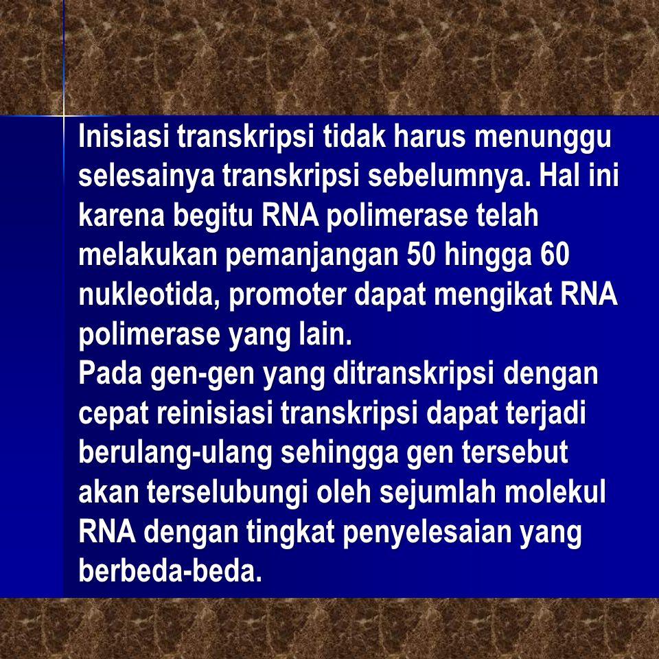 Inisiasi transkripsi tidak harus menunggu selesainya transkripsi sebelumnya. Hal ini karena begitu RNA polimerase telah melakukan pemanjangan 50 hingga 60 nukleotida, promoter dapat mengikat RNA polimerase yang lain.