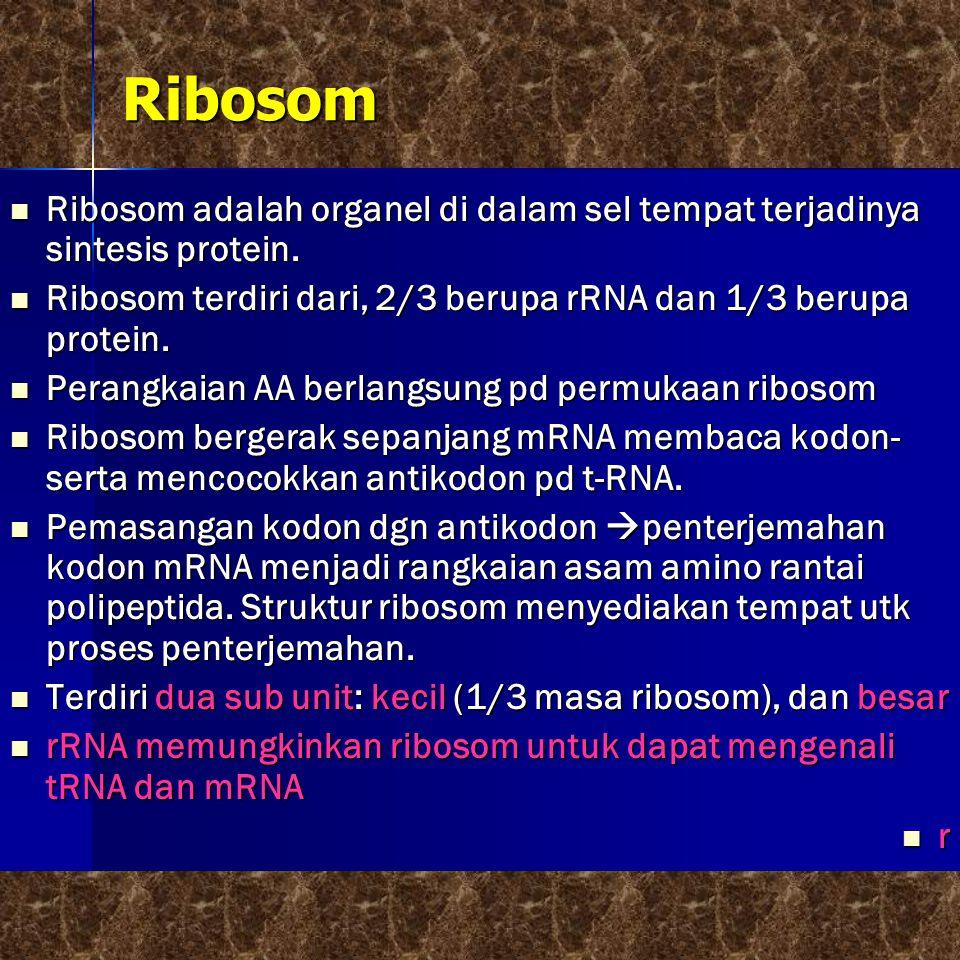 Ribosom Ribosom adalah organel di dalam sel tempat terjadinya sintesis protein. Ribosom terdiri dari, 2/3 berupa rRNA dan 1/3 berupa protein.