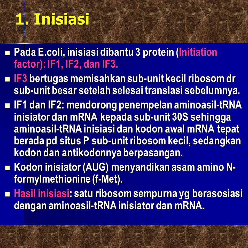 1. Inisiasi Pada E.coli, inisiasi dibantu 3 protein (Initiation factor): IF1, IF2, dan IF3.