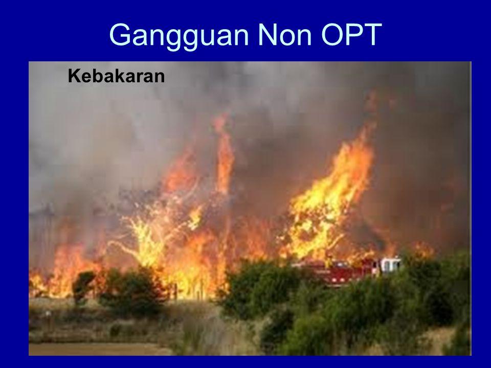Gangguan Non OPT Kebakaran