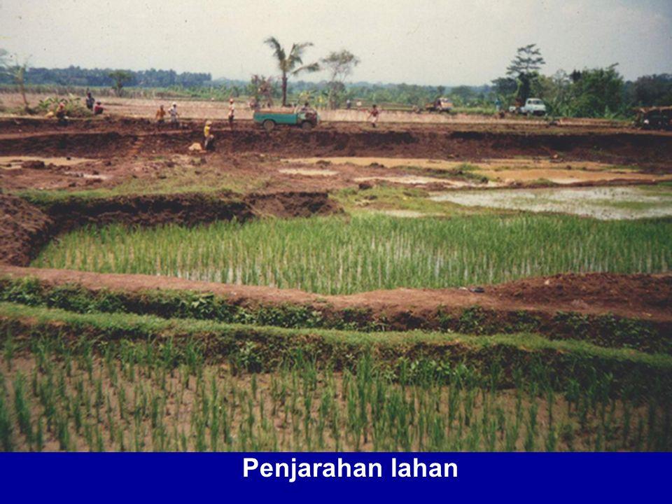 Penjarahan lahan