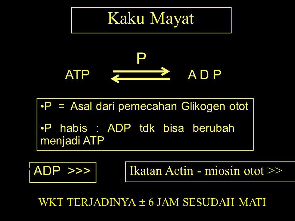 Kaku Mayat P ATP A D P ADP >>>