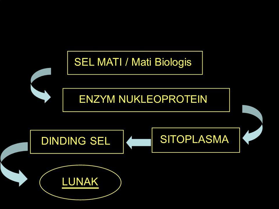 OTOLISA SEL MATI / Mati Biologis ENZYM NUKLEOPROTEIN DINDING SEL SITOPLASMA LUNAK