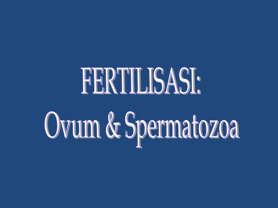 FERTILISASI: Ovum & Spermatozoa