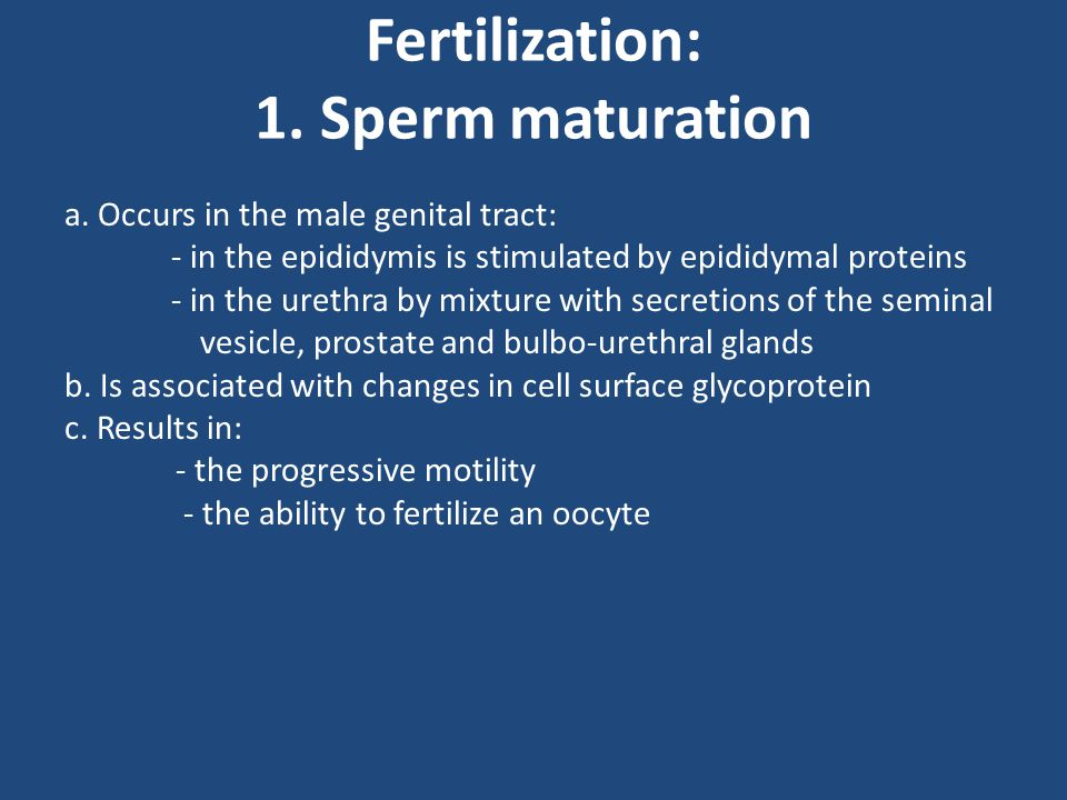 Fertilization: 1. Sperm maturation