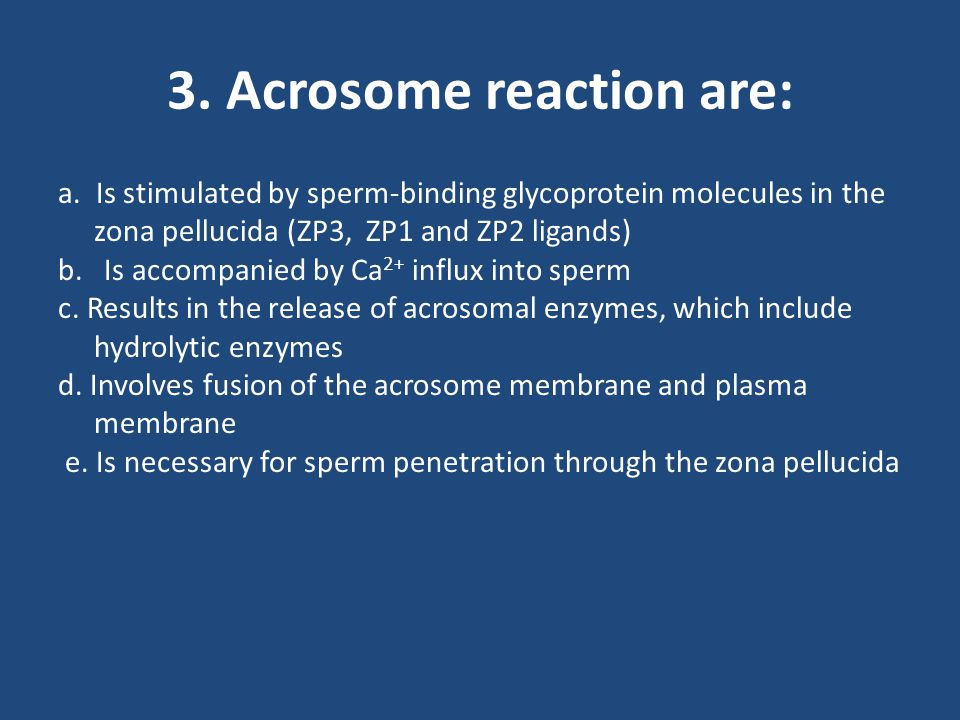 3. Acrosome reaction are: